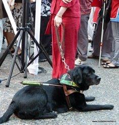 Perro de asistencia acompaña a persona con discapacidad visual