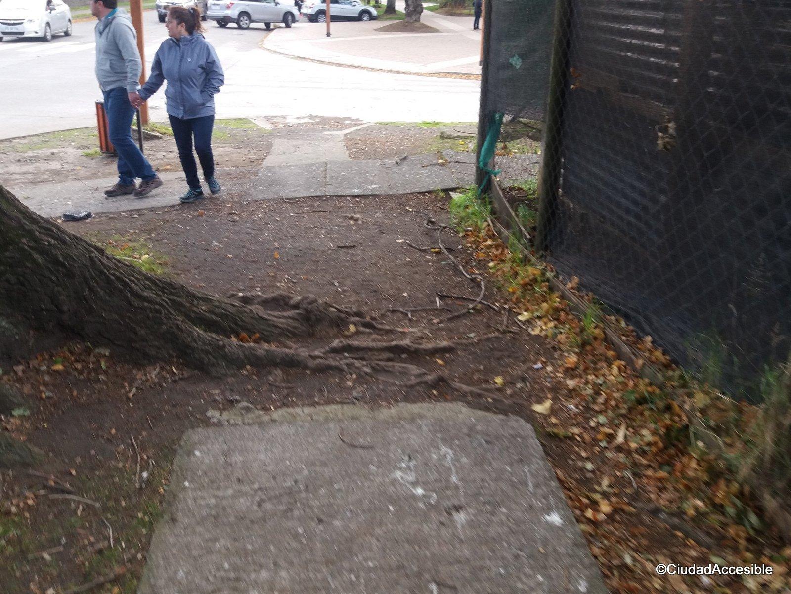 raíz de arbol que interrumpe la vereda creando un obstáculo y posibilidad de tropiezo