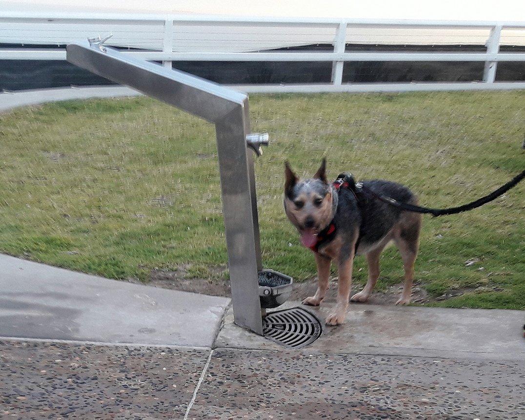 bebederos accesibles y para mascotas en Playa New Castle