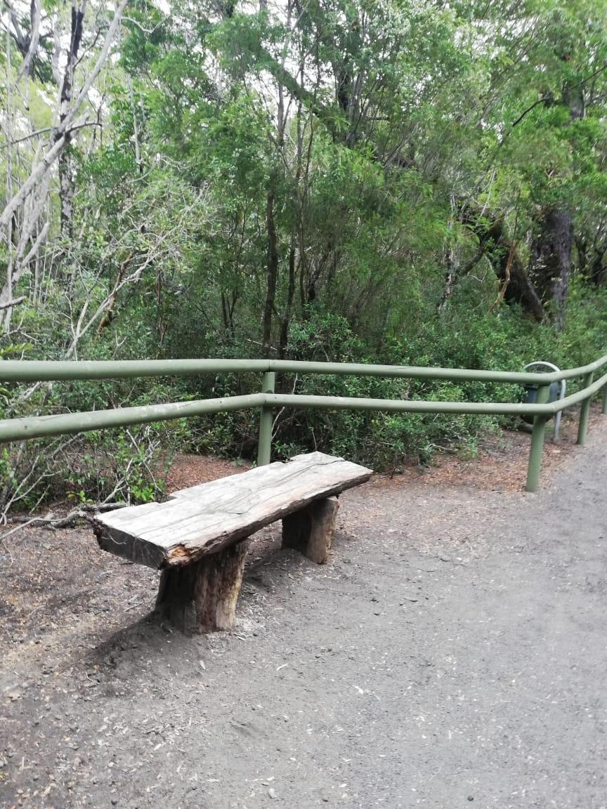 asientos de troncos para el descanso