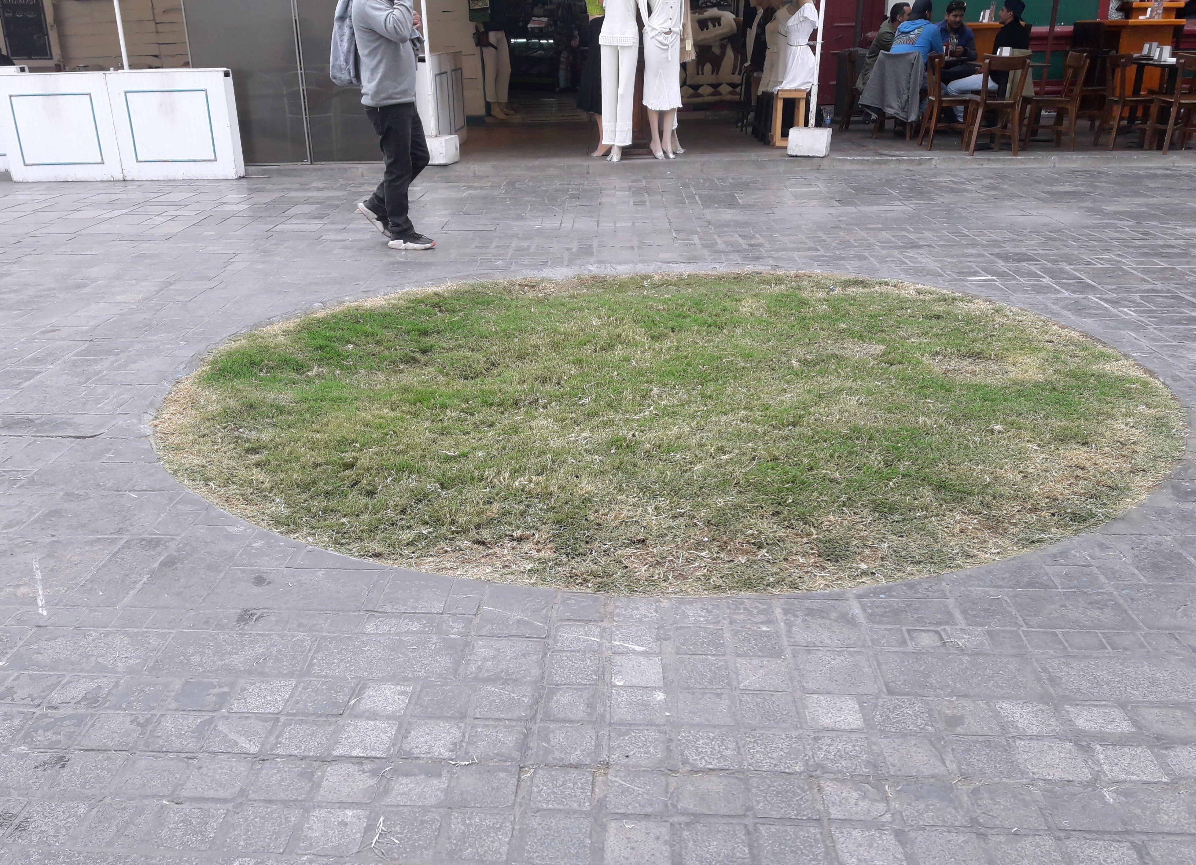 circulo de pasto elevado en medio de una circulación de adoquines