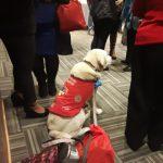 perro de asistencia sentado y en espera durante una reunión