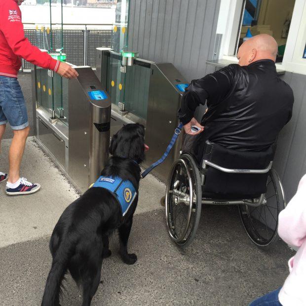 persona con discapacidad en silla de ruedas de espaldas junto a su perro de asistencia